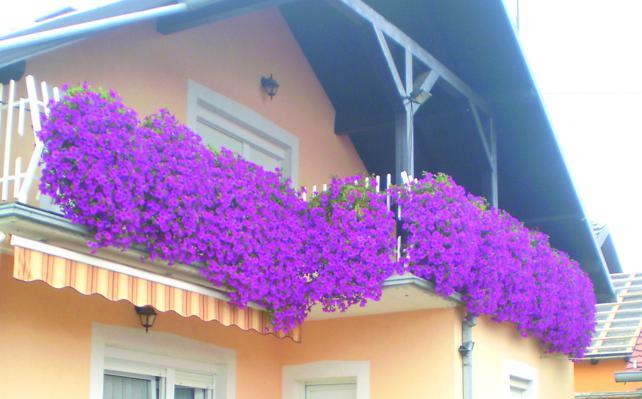 Balkon Ožvaltovih za Zeleni cvijet