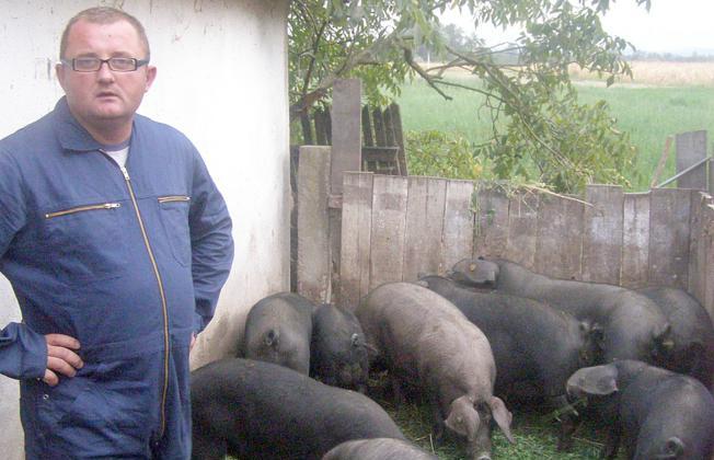 Manjak pašnjaka, na kojima inzistira EU, smanjit će broj svinja