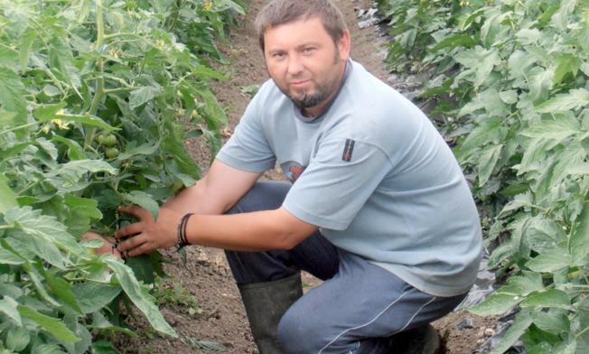 Antunovići su orijentirani na  proizvodnju domaće rajčice