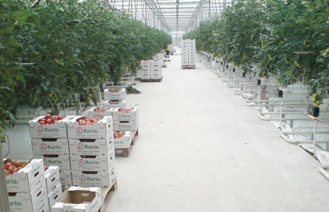 Termalna voda grijat će staklenike Rurisa, vodećeg opskrbljivača tržišta rajčicom